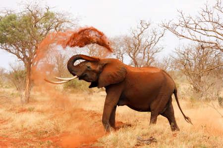 elephant in the nature Foto de archivo