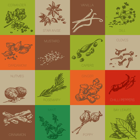 Hand drawn natural spices vector icon set