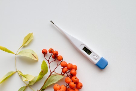 specific: a thermometer to measure the temperature and Autumn red rowan Stock Photo