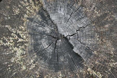 Beautiful slice of old tree trunk Stock Photo