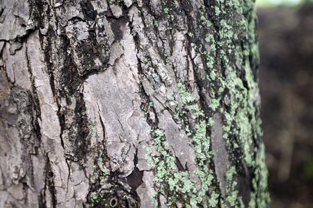 Mossy green gray tree trunk texture