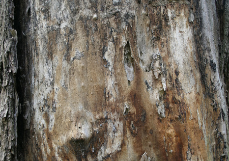 Beautiful texture of the old tree trunk