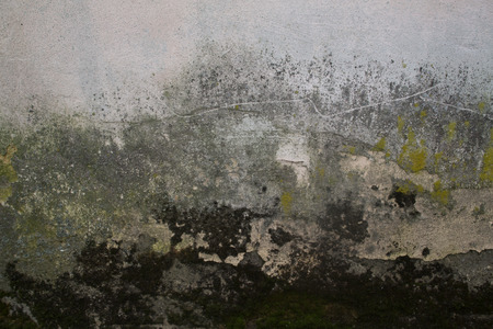 Texture of old plaster mossy lichen wall Stock Photo