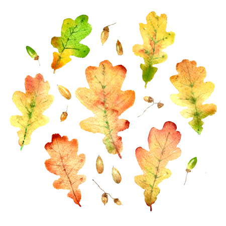 Watercolor hand drawn fallen oak leaves set Stock Photo
