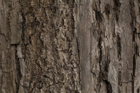 Beautiful texture of the old tree bark Stock Photo