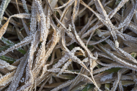 Tangled winter dry grass in the frost on the field close-up Stock Photo