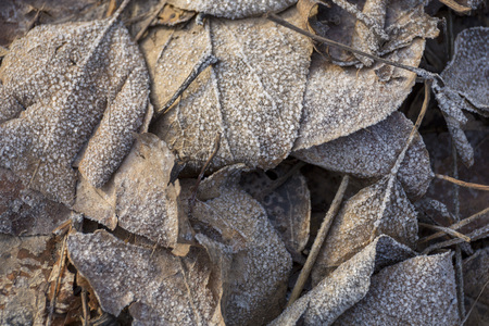Beautiful gray frozen leaves in the sunlight close-up background Stock Photo