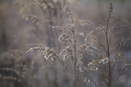 Beautiful dry withered frozen winter plants background Stock Photo - 94691511