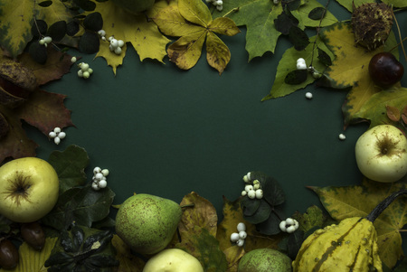 Dark green yellow fall fruit harvest leaves frame still-life top view