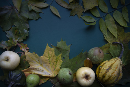 Dark green blue fall October fruit harvest leaves frame still-life top view