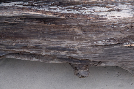 Beautiful texture of the old sea washed tree trunk