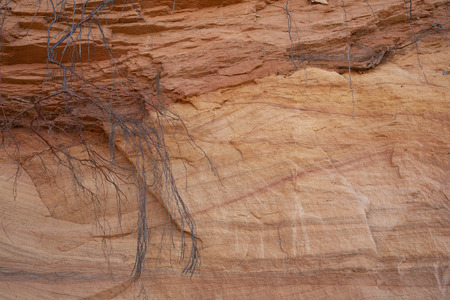 Beautiful red layered Sandstone cliff texture surface with tree roots