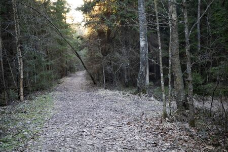 Empty trail road in the dark wild forest in spring