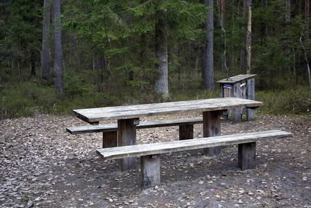 Empty wooden table and bench in spring wild forest