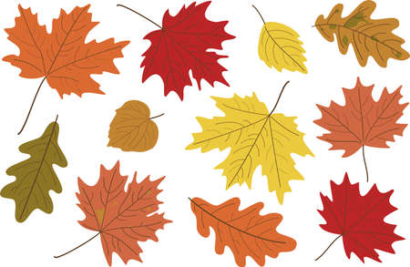 set of bright realistic autumn leaves. Fall leaves background. Maple, Linden, oak and poplar leaves. Vettoriali