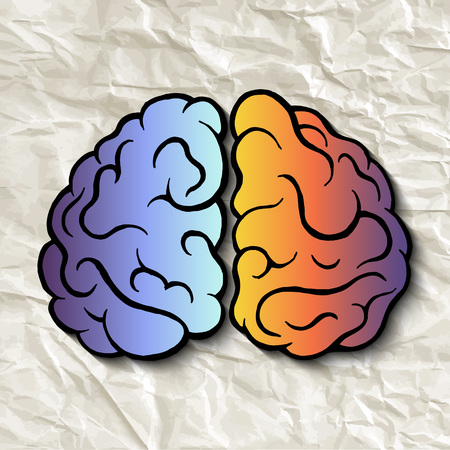 hemispheres: The left and right hemispheres of the brain. Hand drawn vector illustration.
