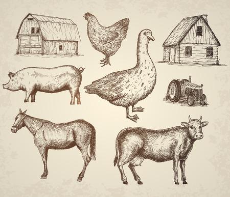 carnicero: Colección Farm. Elementos aislados dibujados a mano Vctor ilustración. Vectores