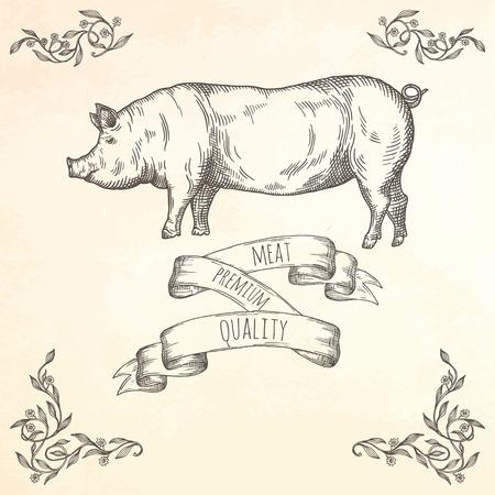 Hand drawn pig illustration. Farm animal vector illustration.  イラスト・ベクター素材