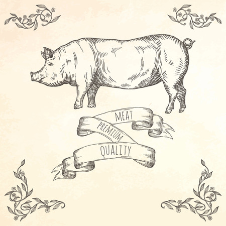 Hand drawn pig illustration. Farm animal vector illustration. 向量圖像