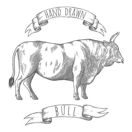 Bull Hand gezeichnete Illustration. Vektorgrafik