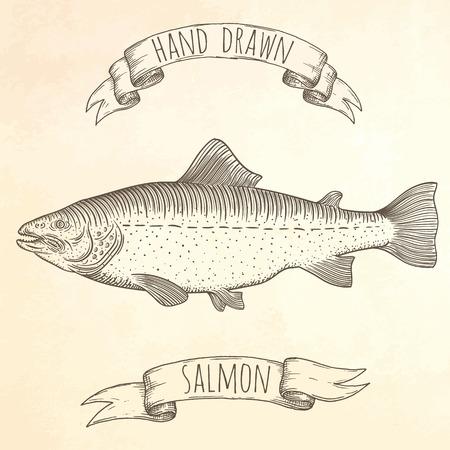 white salmon river: Salmon hand drawn illustration