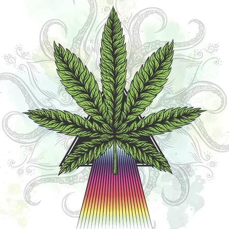cannabis sativa: Marijuana leaf. Hand drawn isolated illustrations on abstract watercolor background. Illustration