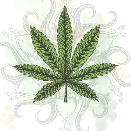 indica: Marijuana leaf. Hand drawn isolated illustrations on abstract watercolor background. Illustration