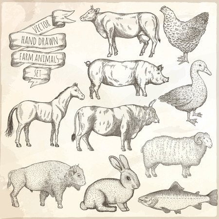 Farm animals set. Hand drawn vector illustration.