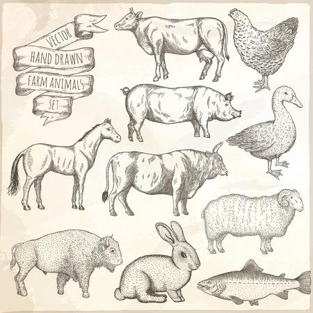 Landbouwhuisdieren instellen. Hand getrokken vector illustratie.