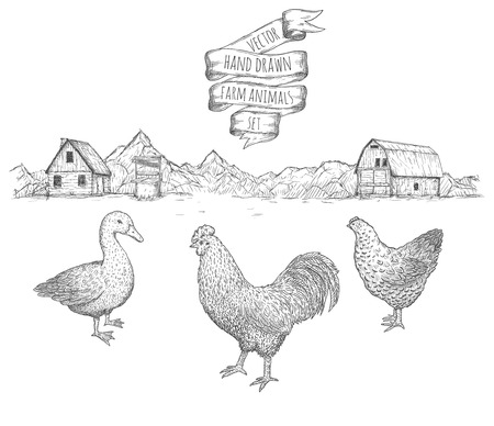 Hand drawn set of farm birds against the background of the rural landscape. Vector eps10.
