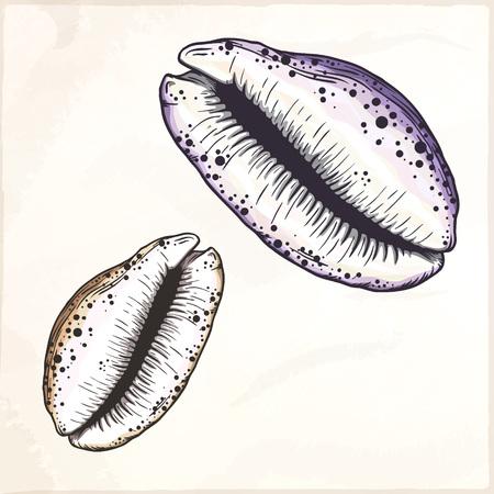 Cartoon seashell illustration. Illustration