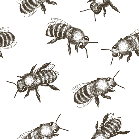 Hand drawn vector seamless pattern with bees. 矢量图像