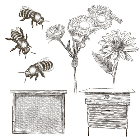 Hand drawn vector illustrations set with bees, flowers, hive and honeycomb.