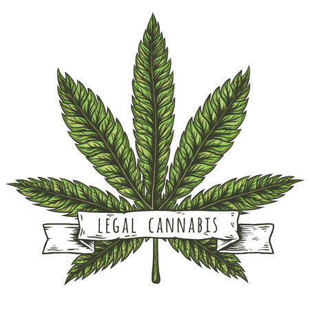 Cannabis leaf vector illustration. Vector isolated illustrations. Иллюстрация