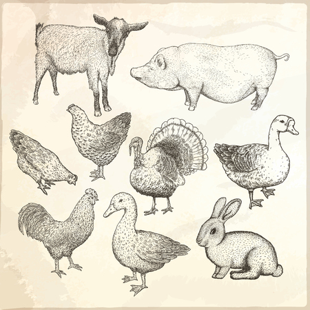 Collection of farm animals. Hand drawn vector isolated illustrations. Illustration