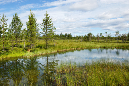 bogs: Beautiful summer landscape with forest, lake and swamp. Northern Finland, Lapland