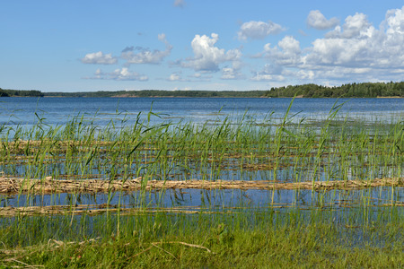 swampy: Blue lake with swampy shores. Finland