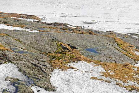 Two crows on rocks of Liuskasaari island in early spring. Helsinki Archipelago. Suomi Standard-Bild