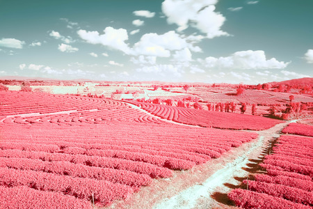 Beautiful infrared landscape forest image