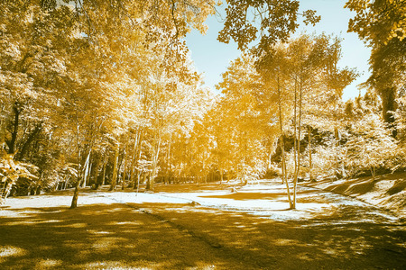 infrared: Beautiful infrared landscape forest image