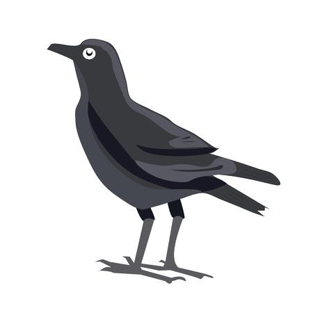 dreary: Black crow.