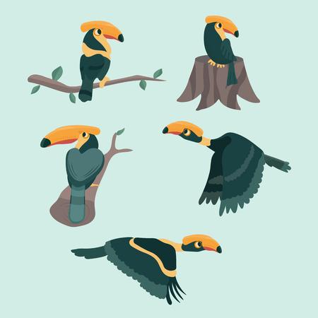 Bird hornbill set cartoon vector illustration. Illustration