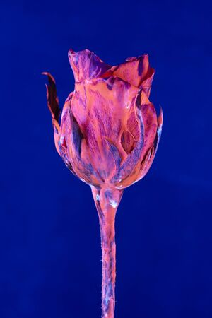 Flower with neon glow on background. Selective focus Stock Photo