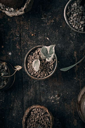 Beautiful small tree in clay pots View from the top. Banque d'images