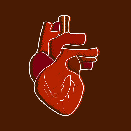 Stylized human heart anatomy icon. Illustration