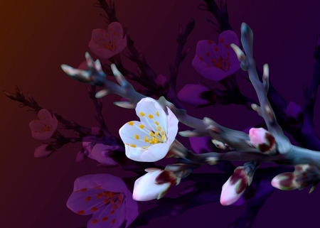 Blossoming almond branch with pink flowers. Realistic isolated vector illustration.