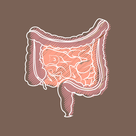 Human digestive system intestines gut anatomy gastrointestinal tract diagram. Styling hatching
