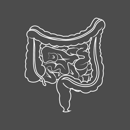Human Digestive System Intestines Gut Anatomy Gastrointestinal