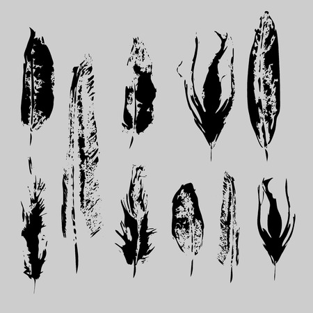 Vector Grunge bird feathers set. Isolated illustration element. Vector feather for background, texture, wrapper pattern, frame or border. 10 eps