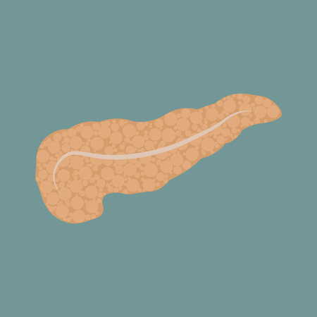 Vector isolated illustration of pancreas anatomy. Human digestive system icon.